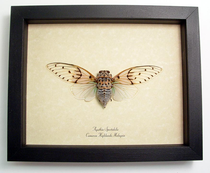 "6.5""x 8"" framed Insects"