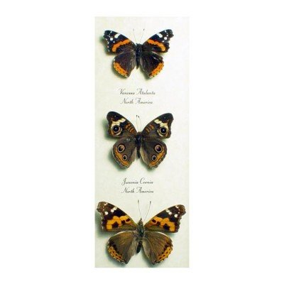 Brushfoot Butterfly Trio