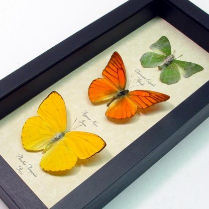 "5""x 9.5"" Framed Insects"