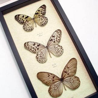 Rice Paper Butterfly Set