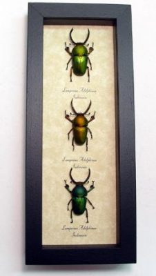 """4""""x 9.5"""" Framed Insects"""