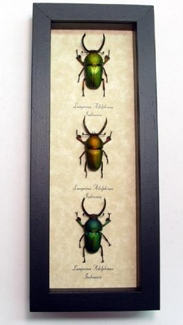 "4""x 9.5"" Framed Insects"