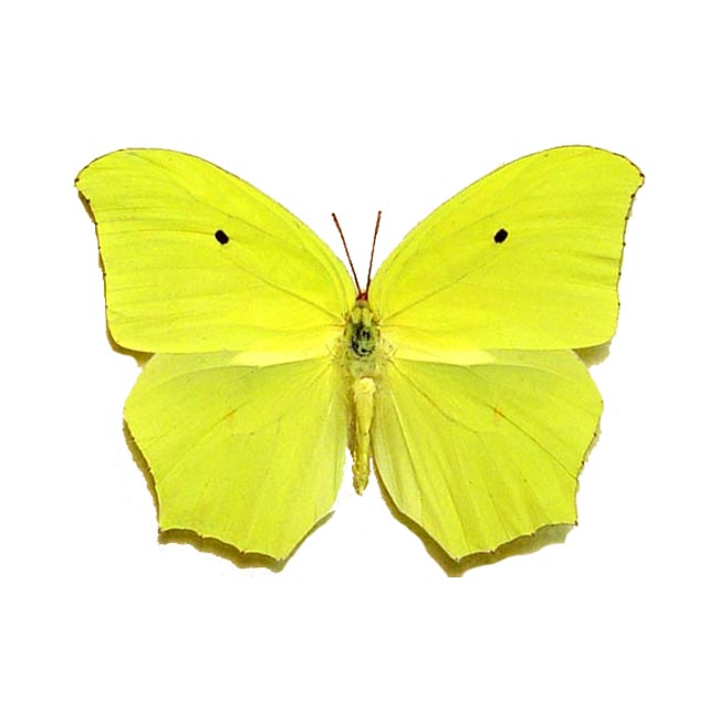 butterfly on yellow color - photo #17