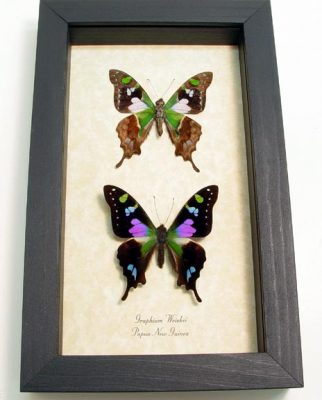 """5""""x 8"""" Framed Insects"""