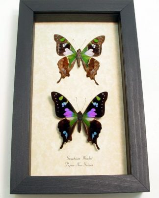 "5""x 8"" Framed Insects"