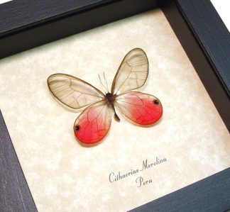 Pink Butterflies & Insects