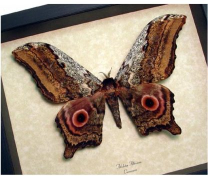 Moths from Around The World