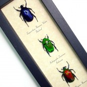 Red-Green-Blue-Jewel-Beetles