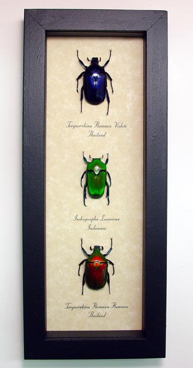 Beetle Sets