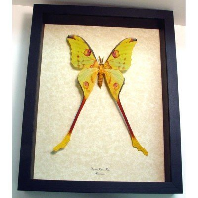 "9.5""x 12"" Insect Frames"