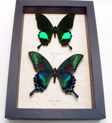 """6.5""""x 9.5"""" Framed Insects"""