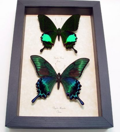 "6.5""x 9.5"" Framed Insects"