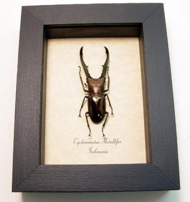 """4""""x5"""" framed Insects"""