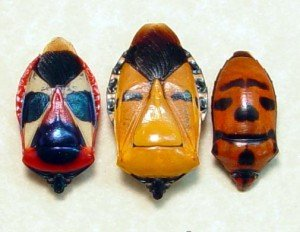 hemiptera-sp-man-face-beetle-set-4