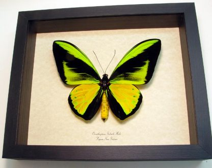 """8""""x 9 1/2"""" Insect Frames"""