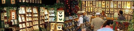 Wholesale Insects – Real Framed Butterflies Insects by Butterfly Designs