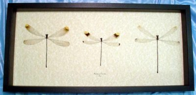 Giant Damselfly set 3 Real Frame Helicopter Damselfly Collection