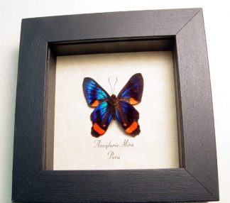 "4""x4"" framed insects"