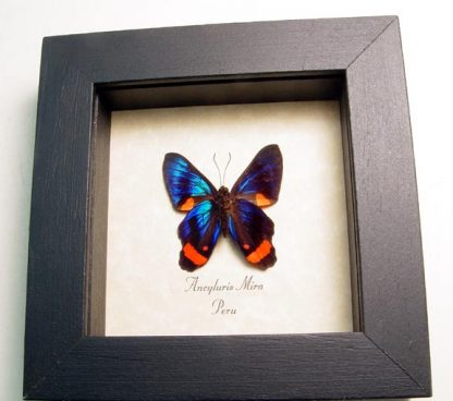 """4""""x4"""" framed insects"""