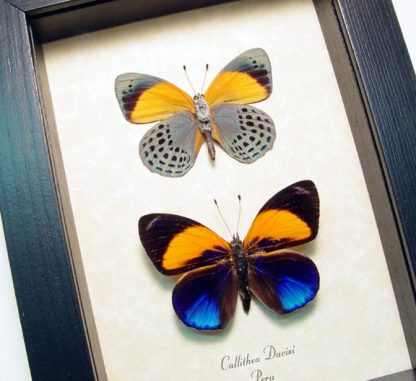 Multi Colored Butterflies & Insects