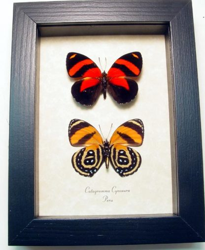 "5""x 6.5"" framed Insects"