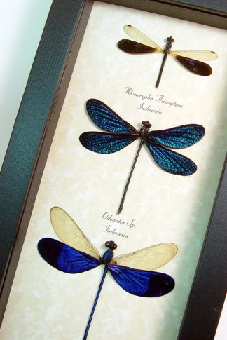 damselfly-collection-blue-sparkels-3
