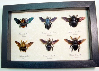 Bees From Around the World