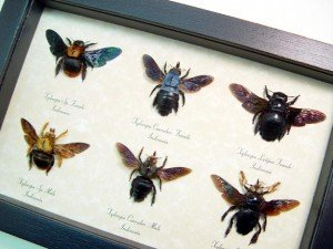 Giant Bumble Bee Collection - Wholesale Exclusives