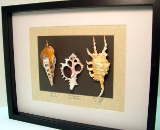 shell-collection-2