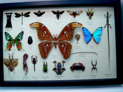 Set Land Sea Sky Collection 20 Real Framed Taxidermy Specimens