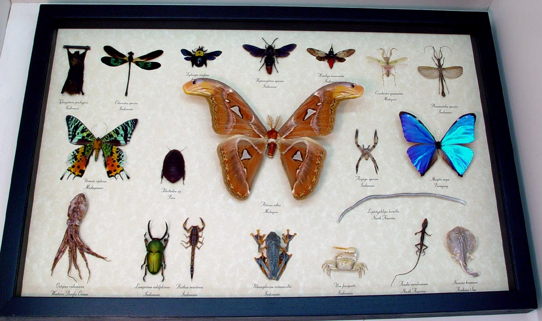 Set Land Sea Sky Collection 20 Real Framed Taxidermy Specimens Sug ...