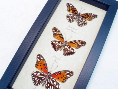 Silver Spot Collection Butterfly Set