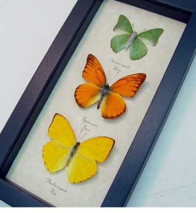 Citrus Collection Lemon Lime Orange Butterflies