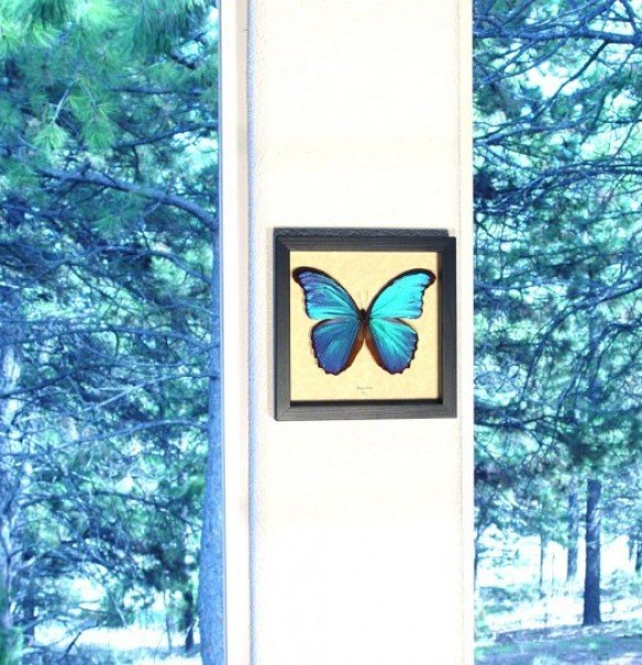 morpho-real-framed-butterfly-3
